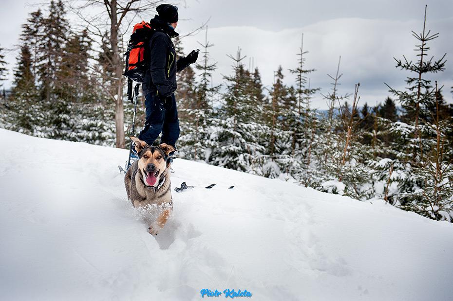 Śnieżnik, Skitury, Narty